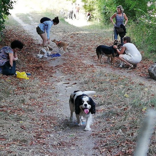 Organisation balades canines adaptées chiens